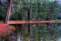вечнозеленые отражения Стоковое Фото