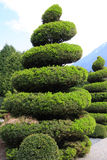 вечнозеленый большой topiary Стоковые Фото