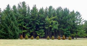 Вечнозеленый взгляд леса на пасмурный день стоковые фотографии rf