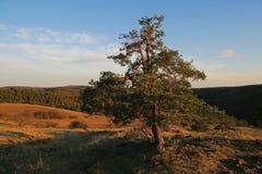 Вечнозеленое дерево в ландшафте осени Стоковая Фотография