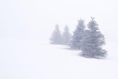 Вечнозеленые деревья в тумане стоковые изображения rf