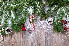 Вечнозеленые подсказки и тросточки ветви предусматриванные в снеге Стоковая Фотография
