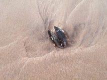 Вещи в пляже Стоковые Изображения