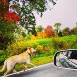 Вещи собаки Стоковое Изображение RF