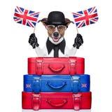 Великобританская собака стоковая фотография