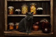 Великобританский кот сидит на таблице на предпосылке винтажного шкафа с банками Стоковые Изображения