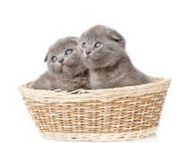 2 великобританских котят shorthair в корзине Изолировано на белизне Стоковые Фотографии RF