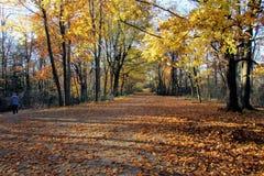 Великолепие осени в Онтарио Стоковые Изображения RF