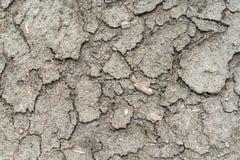 великолепная сухая почва Стоковое фото RF