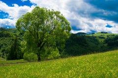 Великолепное дерево Стоковая Фотография