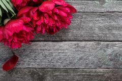 Великолепные розовые пионы цветут на деревенской деревянной предпосылке Селективный фокус Стоковое Изображение RF