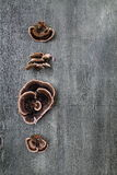 величает древесина Стоковое Фото
