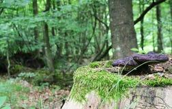 величает древесина Стоковые Фотографии RF