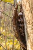 величает ствол дерева Стоковые Изображения RF
