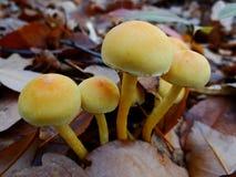 Величают toadstools в лесе Стоковая Фотография RF