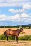 Величественная грациозно коричневая лошадь в луге Стоковые Фото