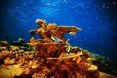 Величественная морская флора и фауна Стоковая Фотография RF