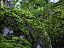 Величественные камни в старом парке Стоковое Фото