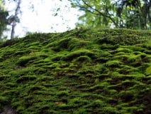 Величественные камни в старом парке Стоковое Изображение