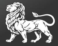 Самолюбивый лев Стоковые Изображения RF