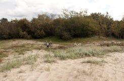 2 велосипеда в дюнах Стоковое фото RF