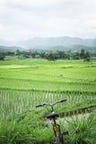 Велосипед езды туризма поля риса на городе pai Стоковые Фото