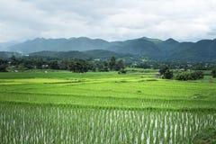 Велосипед езды туризма поля риса на городе pai Стоковое Фото
