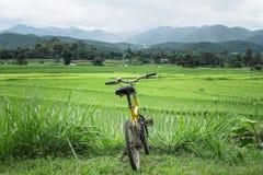 Велосипед езды туризма поля риса на городе pai Стоковое Изображение