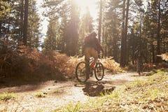 2 велосипедиста велосипед на лесе отстают, подсвеченный, задний взгляд Стоковые Фото
