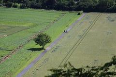2 велосипедиста на пути велосипеда Стоковые Фотографии RF