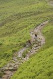 2 велосипедиста на следе сельской местности Стоковая Фотография RF