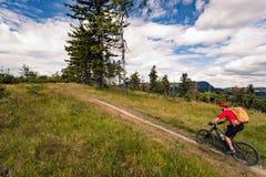 Велосипедист горы ехать MTB в горах и древесинах Стоковое Изображение