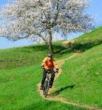 Велосипедист ехать велосипед на зеленом холме с красивым деревом Стоковое Фото