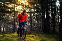 Велосипедист ехать велосипед на следе в красивой Fairy концепции приключения и перемещения соснового леса Стоковая Фотография RF