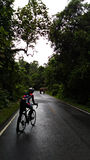 Велосипедист который ждущ слона шагните далеко от дороги Стоковая Фотография RF