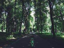 Велосипед и лес Стоковая Фотография