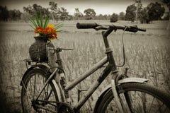 Велосипед и цветки Стоковая Фотография