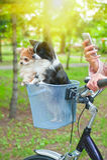 Велосипед идя с собаками Стоковая Фотография RF