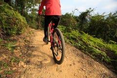Велосипед катания женщины на горной тропе леса Стоковые Изображения RF