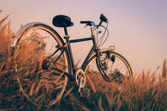 Велосипед на заходе солнца в парке стоковое изображение rf