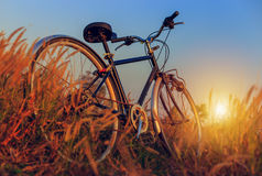 Велосипед на заходе солнца в парке Стоковое фото RF