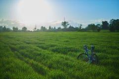 Велосипед на поле травы в утре стоковая фотография rf