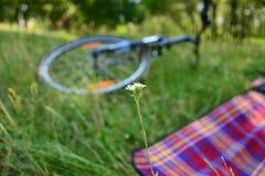 Велосипед на траве стоковые изображения rf