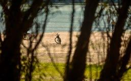 Велосипед отдыхать на пляже Дуная, Румыния Стоковые Изображения RF