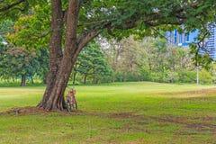 Велосипед под деревом в парке Стоковые Изображения