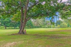 Велосипед под деревом в парке Стоковое фото RF