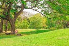 Велосипед под деревом Стоковое Изображение
