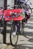 Велосипед силы цветка Стоковые Фото