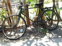 велосипед старый Стоковые Изображения