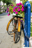 Велосипед с цветками Стоковые Изображения